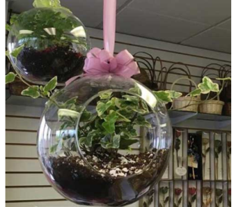 Hanging Terrariums in Sitka AK, Bev's Flowers & Gifts