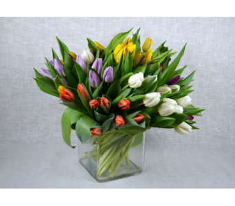 Mixed Tulips of Spring in Fort Myers FL, Ft. Myers Express Floral & Gifts