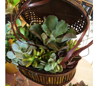 Succulent Basket in Houston TX, Village Greenery & Flowers