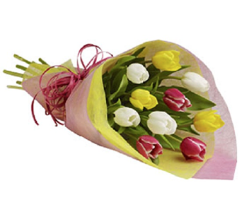 Tulips Wrapped in Timmins ON, Timmins Flower Shop Inc.