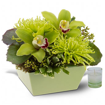 Go Green in Santa Monica CA, Edelweiss Flower Boutique