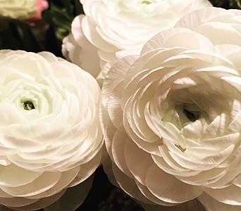 Pearl-Florist Choice in Toronto ON, Bloominghill Flowers