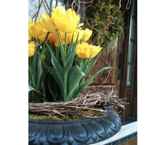 Spring Outdoor Urn, Tulip & Willow Design in Etobicoke ON, VANDERFLEET Flowers