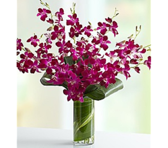 Orchid Sensation in Largo FL, Rose Garden Flowers & Gifts, Inc