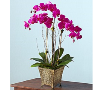 Majestic Orchid Garden in Largo FL, Rose Garden Flowers & Gifts, Inc