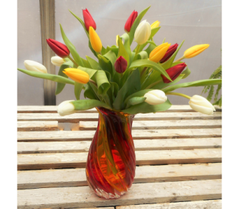 Bold & Beautiful Tulip Vase in Skowhegan ME, Boynton's Greenhouses, Inc.