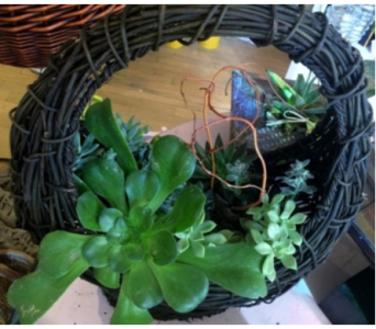Succulent Round Basket in Houston TX, Village Greenery & Flowers