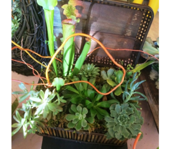 Large Basket Succulent in Houston TX, Village Greenery & Flowers