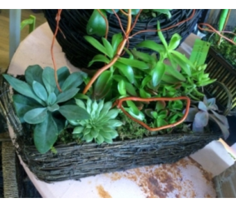 Succulent Handle Basket in Houston TX, Village Greenery & Flowers