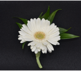 Mini Gerbera Daisy Boutonniere in Zeeland MI, Don's Flowers & Gifts