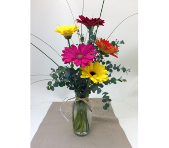 Gerbera Daisys  in Rochester MN, Sargents Floral & Gift