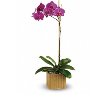 Orchid in Ft. Lauderdale FL, Jim Threlkel Florist