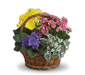Flower Basket in Ft. Lauderdale FL, Jim Threlkel Florist