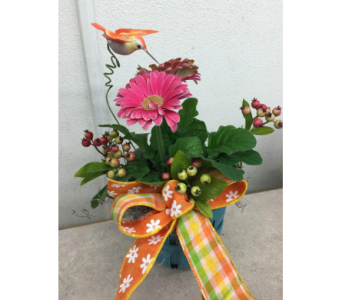 Mini Gerbera Plant in Hales Corners WI, Barb's Green House Florist