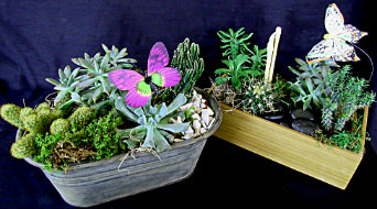 Butterfly Succulent Gardens in Farmington CT, Haworth's Flowers & Gifts, LLC.