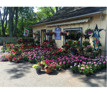 Primrose Flower Shop in Dresher PA, Primrose Extraordinary Flowers
