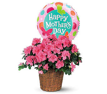 Pink Azalea with Mother's Day Balloon by 1-800-balloons