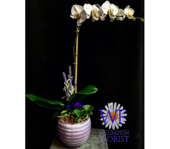 Orchid and Violet planter in Wellington FL, Wellington Florist