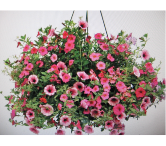 Hanging Basket in Toledo OH, Myrtle Flowers & Gifts