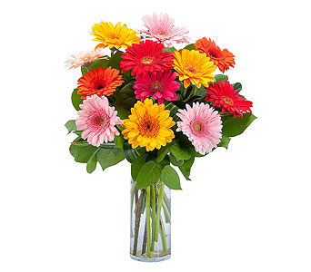 Grand Gerbera in West Des Moines IA, Nielsen Flower Shop Inc.