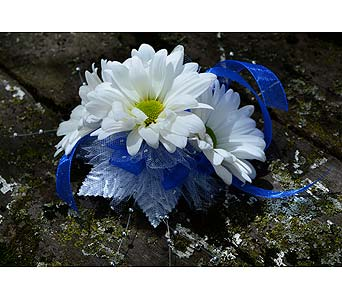 Nu Blue Daisy in Indianapolis IN, Gillespie Florists