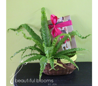 Indoor Green Plant and Chocolate in Sylvania OH, Beautiful Blooms by Jen