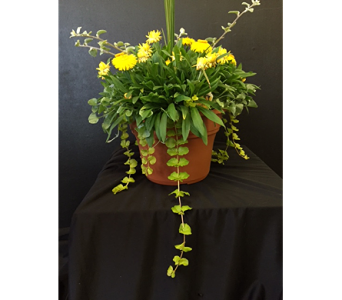 Mixed Flower and Green Plants in Newton KS, Designs By John Flowers & Tuxedos, Inc