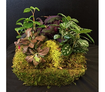 Interior Foliage Plant Scape in Newton KS, Designs By John Flowers & Tuxedos, Inc