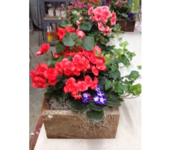 Blooming Planter in Glasgow KY, Greer's Florist