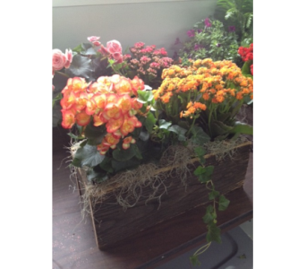 Burst of Flowers Planter in Glasgow KY, Greer's Florist