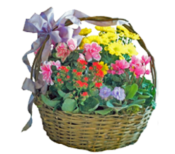English Garden Basket in Little Rock AR, Tipton & Hurst, Inc.