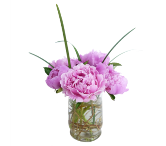 Dainty Pink Peonies in Silver Spring MD, Bell Flowers, Inc