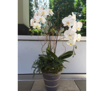 Orchid in Bellevue WA, CITY FLOWERS, INC.