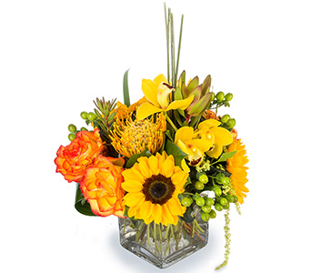Sunburst in Fort Worth TX, TCU Florist