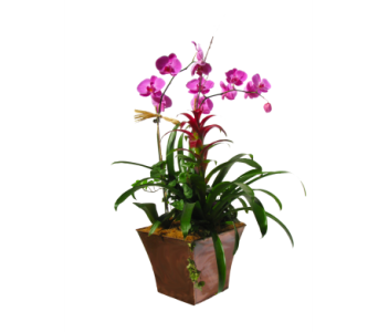 Double orchid with bromeliad & green plant in Clearwater FL, Hassell Florist