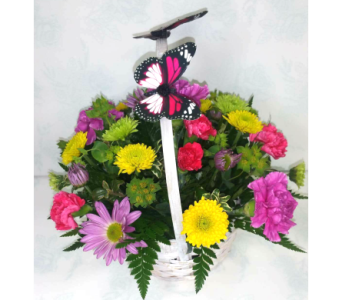 Butterfly basket in Weyburn SK, Brady's House Of Flowers