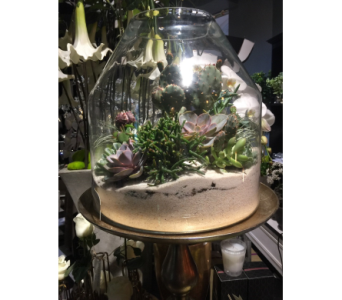 Arizona Terrarium in Bellevue WA, CITY FLOWERS, INC.
