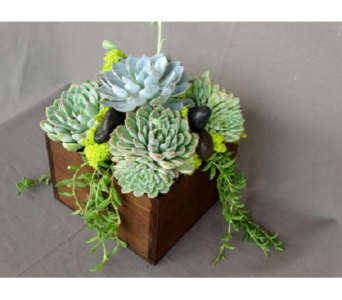 Succulent Gift  in Los Angeles CA, Dave's Flowers