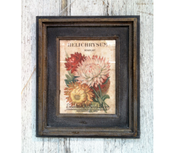 Helichrysum Print in Stephens City VA, The Flower Center