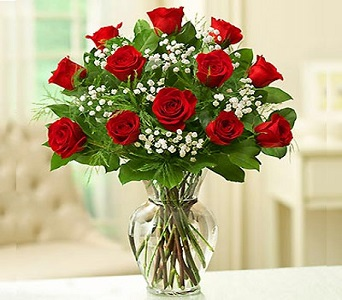 Premium One Dozen Long Stem Red Roses in Camp Hill and Harrisburg PA, Pealers Flowers