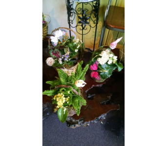 Butterfly and Bird GardensStarting at $35 in Largo FL, Rose Garden Flowers & Gifts, Inc