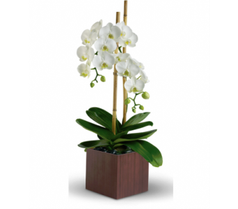 Opulent Orchids in Dark Box in Santa Monica CA, Edelweiss Flower Boutique