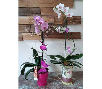 Orchid Gardens in Largo FL, Rose Garden Flowers & Gifts, Inc