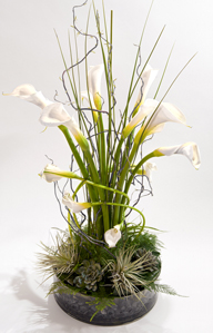 Calla Tempest in New York NY, Starbright Floral Design