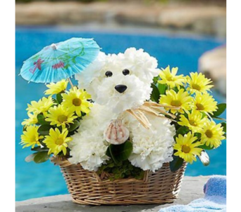 Doggie Paddle in Mountain View CA, Oakbrook Florist