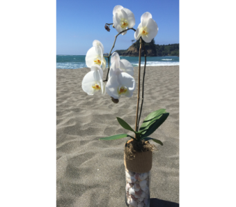 Ocean Breeze Orchids in Arcata CA, Country Living Florist & Fine Gifts
