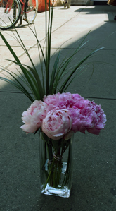 Urban Peonies in New York NY, Starbright Floral Design