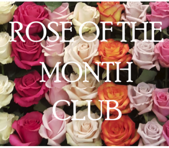 Rose of the month club in Merrick NY, Feldis Florists