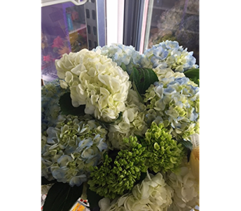 Heavenly Hydrangea in Raleigh NC, North Raleigh Florist
