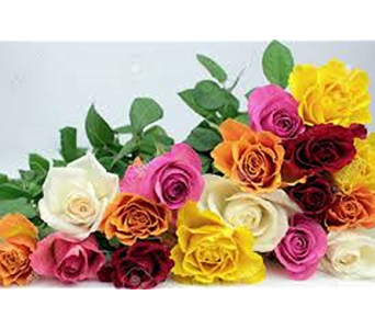 Rainbow of Roses in Raleigh NC, North Raleigh Florist